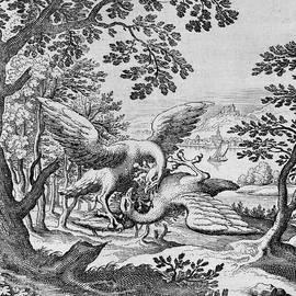 Birds fighting from Musaeum Hermeticum, 1678 - German School