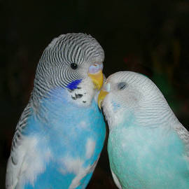 Marilyn Wilson - Birds of a Feather