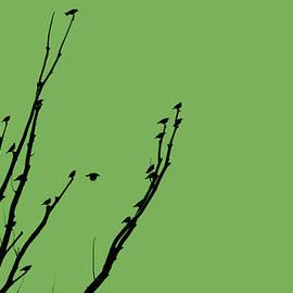 Jennie Marie Schell - Birds Silhouette Green