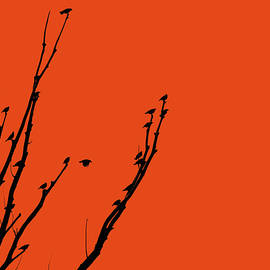 Jennie Marie Schell - Birds Silhouette Orange