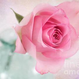 Carolyn Rauh - Birthday Rose