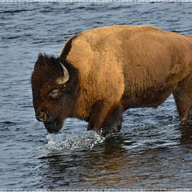 Kae Cheatham - Bison Crossing River