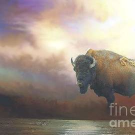 Janette Boyd - Bison in Yellowstone