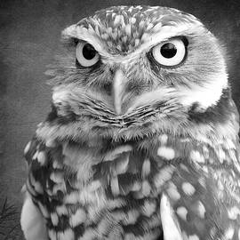 Steve McKinzie - Black and White Burrowing Owl
