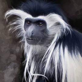 Penny Lisowski - Black and white colobus monkey
