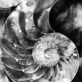 Sharon Cummings - Black And White Nautilus Shell By Sharon Cummings