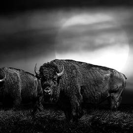 Randall Nyhof - Black and White of an American Buffalo under a Super Moon