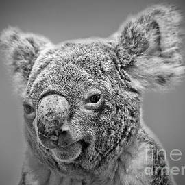 Jim Fitzpatrick - Black and White Portrait of a Koala