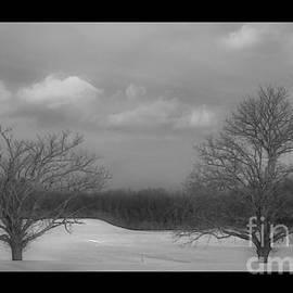 Marcel  J Goetz  Sr - Black and White Trees