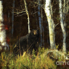 Wildlife Fine Art - Black Bear - Autumn Stare