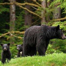 Inge Riis McDonald - Black Bear Family