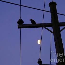 Robyn King - Black Crow