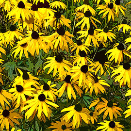 Jean Hall - Black-Eyed Susans