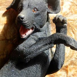 Tina M Wenger - Black Labrador