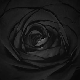 Damijana Cermelj - Black rose