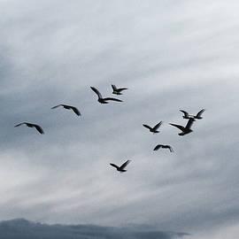 Marcus Karlsson Sall - Black Seagulls