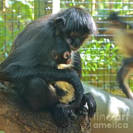 AnnaJo Vahle - Black Spider Monkey and Baby