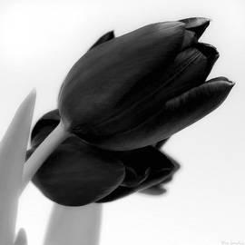 Wim Lanclus - Black Tulips