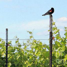 Blackbird Has Spoken