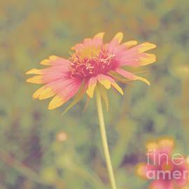 Gary Richards - Blanket Flower Portrait