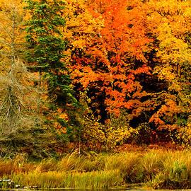 Bill Morgenstern - Blazing Maples