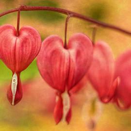 Geraldine Scull   - Bleeding Heart Flowers