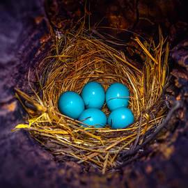 Brian Stevens - Blessed Nest
