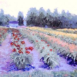 David Zimmerman - Blooming at Sunrise
