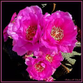Barbara Zahno - Blooming Prickly Pear Cactus