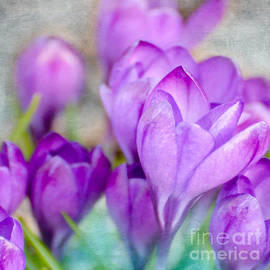 Kerri Farley - Blossoming Souls