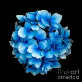 Adrian Evans - Blue
