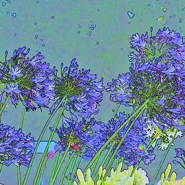 Linda Brody - Blue Agapanthus Flowers Bright Abstract