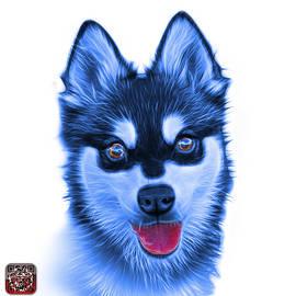 Blue Alaskan Klee Kai - 6029 -WB