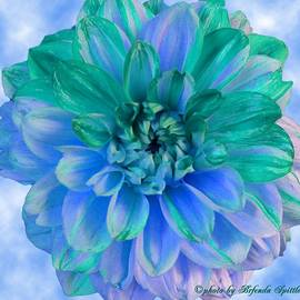 Blue and Green Dahlia