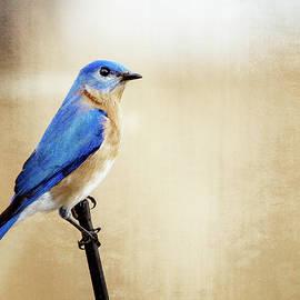 Mitford Fontaine - Blue Bird
