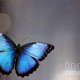 Karen Adams - Blue Butterfly Dreams