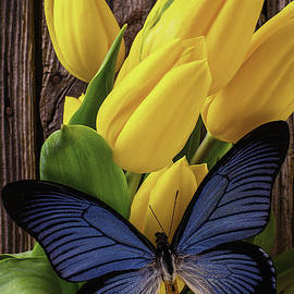 Garry Gay - Blue Butterfly On Yellow Tulips