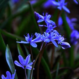 Damijana Cermelj - Blue