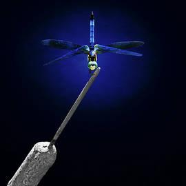 Steven Michael - Blue Dragonfly