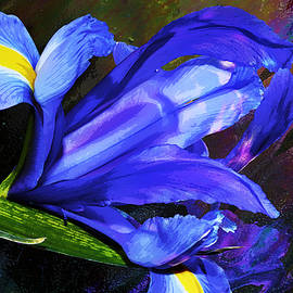 Phyllis Denton - Blue Dutch Iris Painterly