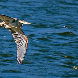 Michael Whitaker - Blue Heron In Flight