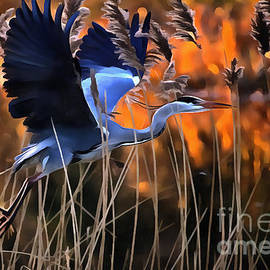 Jack Torcello - Blue Heron