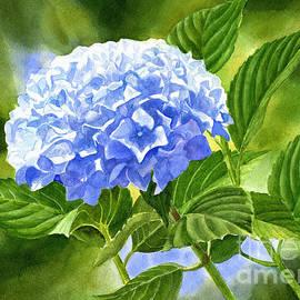 Blue Hydrangea Blossom with Background 2 - Sharon Freeman