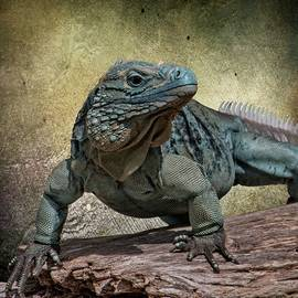 Teresa Wilson - Blue Iguana