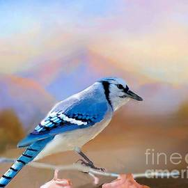 Janette Boyd - Blue Jay in the Oklahoma Hills