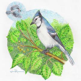 Jim Rehlin - Blue Jay in a Pear Tree