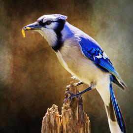 Bill Tiepelman - Blue Jay Snax