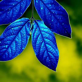 Bliss Of Art - Blue Leaves
