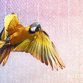 Gregory DUBUS - Blue Macaw in flight art style