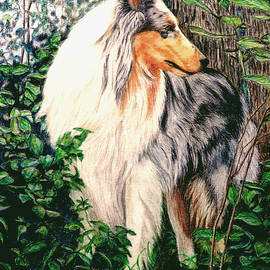 Karen Curley - 		Blue Merle Collie